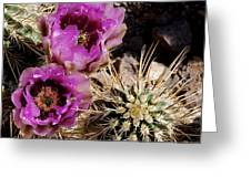 Two Fucshia Blossoms  Greeting Card