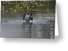Two Geese On A Pond Greeting Card