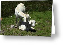 Two Goats In A Pasture Greeting Card
