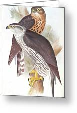 Two Goshawks Greeting Card