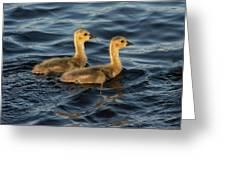 Two Goslings Greeting Card