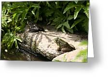 Two Green Frogs Greeting Card