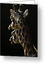 Two Headed Giraffe Greeting Card