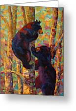 Two High - Black Bear Cubs Greeting Card