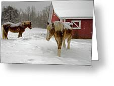 Two Horses In Winter Greeting Card