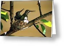 Two Hummingbird Babies In A Nest 5 Greeting Card