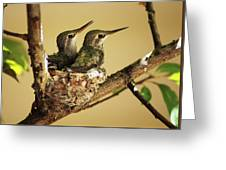 Two Hummingbird Babies In A Nest Greeting Card