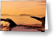 Two Humpback Whales Greeting Card