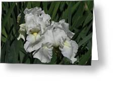 Two Irises Greeting Card