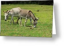 Two Jerusalem Donkeys In A Field Greeting Card
