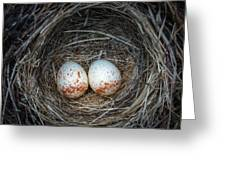 Two Junco Eggs In The Nest Greeting Card