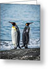 Two King Penguins Facing In Opposite Directions Greeting Card