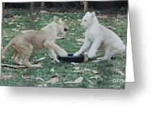 Two Lion Cubs Playing Greeting Card