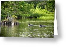 Two Loons Near Old Stump Greeting Card