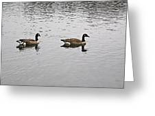 Two Lovely Canadian Geese Greeting Card