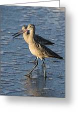 Two Marbled Godwits Greeting Card