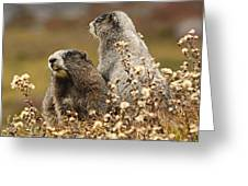 Two Marmots Greeting Card