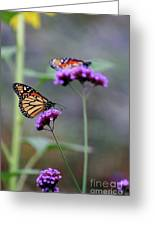 Two Monarchs On Verbena Greeting Card