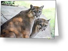 Two Mountain Lions Greeting Card