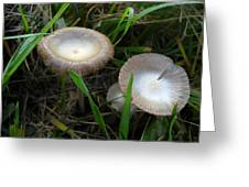 Two Mushrooms In Grass Greeting Card