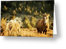 Two Mustangs Post Playtime At The Waterhole Greeting Card