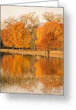 Two Orange Trees Greeting Card