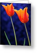 Two Orange Tulips On Blue Greeting Card