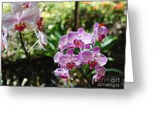 Two Orchid Branches Number One Greeting Card