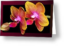 Two Orchids And A Bud Greeting Card