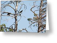 Two Osprey Greeting Card
