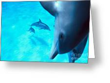 Two Pairs Of Dolphins Greeting Card