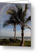 Two Palms And The Gulf Of Mexico Greeting Card