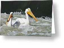 Two Pelicans At Horn Rapids Greeting Card