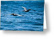 Two Pelicans Flying Greeting Card