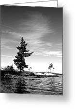 Two Pines Greeting Card
