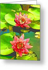 Two Pink Blooming Water Lilies  Greeting Card