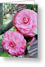 Two Pink Camellias - Digital Art Greeting Card
