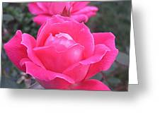 Two Pink Double Roses Greeting Card