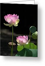 Two Pink Water Lilies Greeting Card