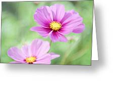 Two Purple Cosmos Flowers Greeting Card