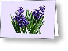 Two Purple Hyacinths Greeting Card