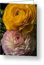 Two Ranunculus Greeting Card