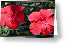 Two Red Hibiscus With Border Greeting Card