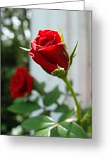 Two Red Roses Greeting Card