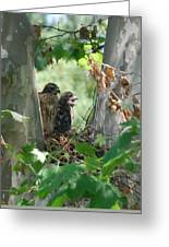 Two Red Shouldered Hawk Chicks Calling Mom  Greeting Card