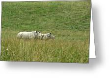 Two Rhino In The Grass Greeting Card