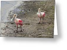 Two Roseate Spoonbills 2 Greeting Card