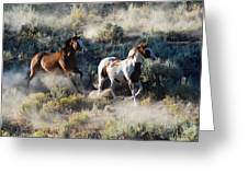 Two Running Horses Greeting Card