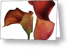Two Rust Calla Lilies Square Greeting Card