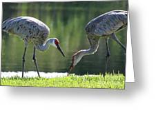 Two Sandhills By The Water Greeting Card